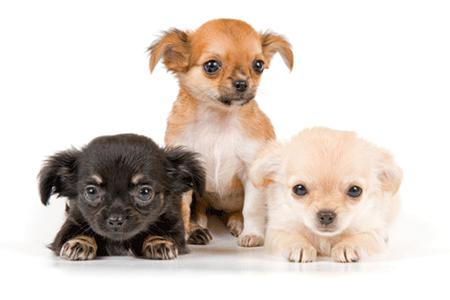 Dog Breeders?